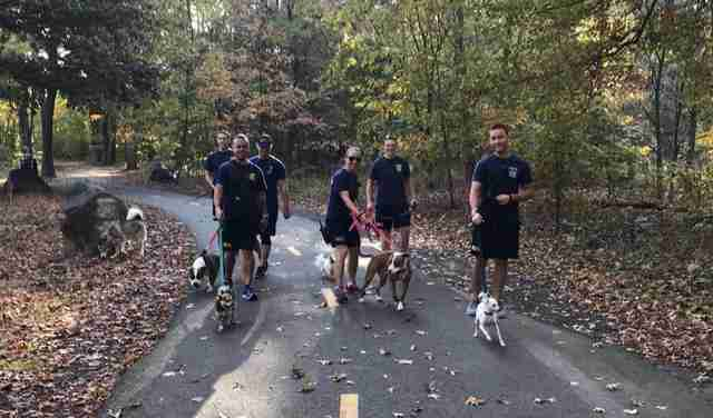 Firefighters walking shelter dogs on bike path