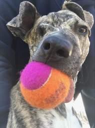 squish dog saved from euthanasia