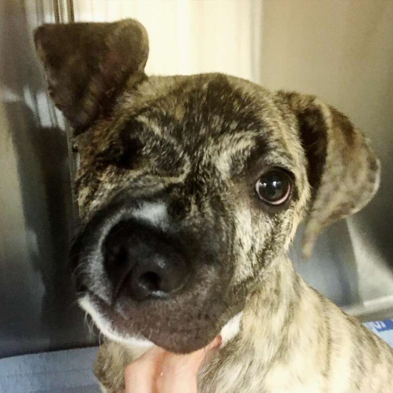 squish dog cuyahoga animal shelter