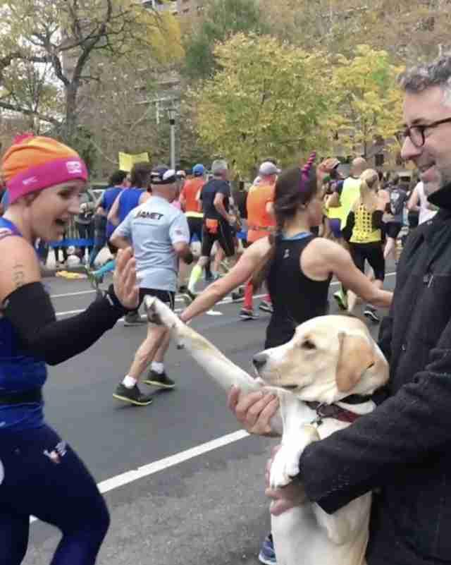 marty dog gives high fives marathon