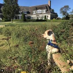 Marty dog high five marathon