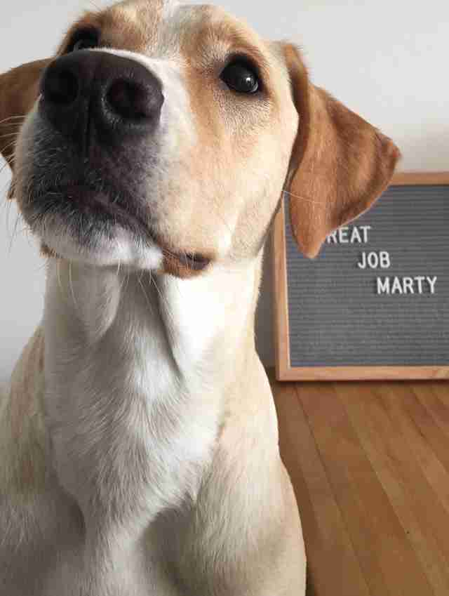 marty dog high fives marathon