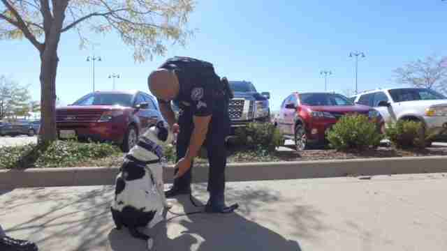 police take dogs on ride alongs