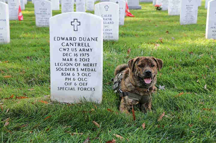 service dog in military cemetery