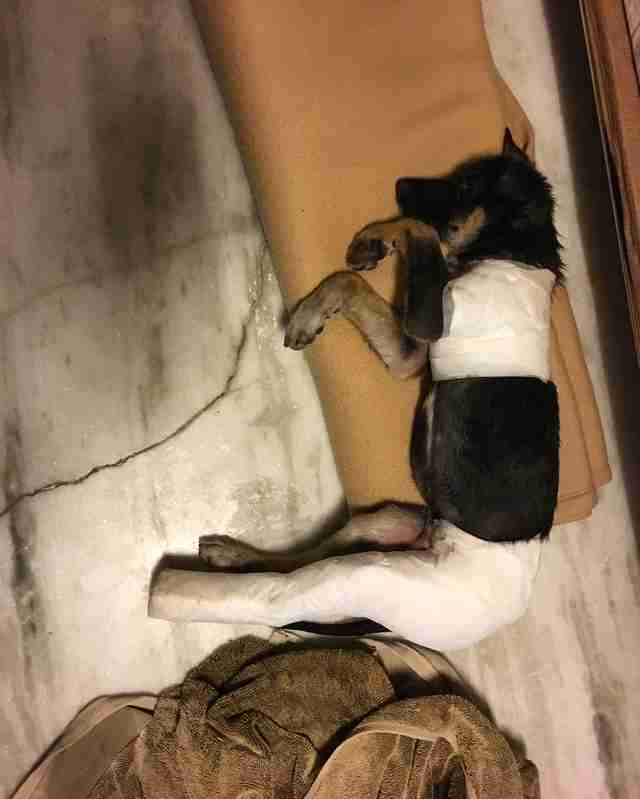 Puppy saved from streets of New Delhi