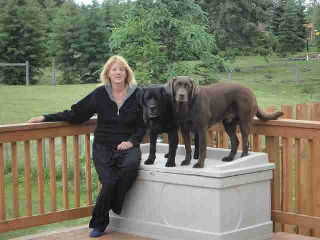 Woman sitting with two Labrador retriever dogs