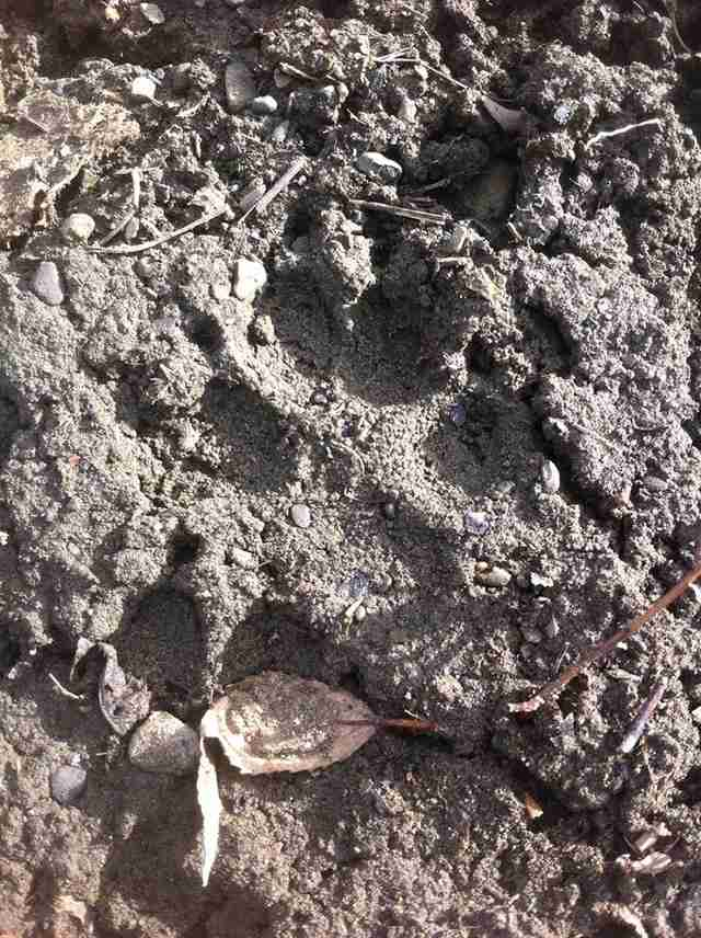 A dog's footprints in the mud