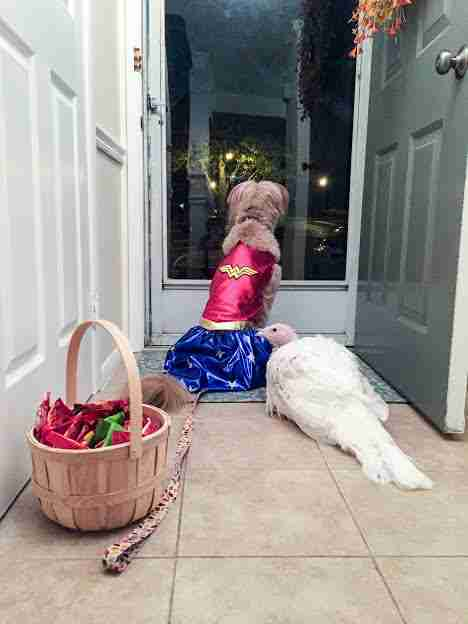 Rescue dog and turkey greeting trick-or-treaters