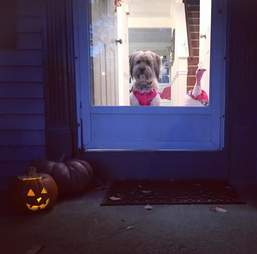 Dog and turkey greeting trick-or-treaters