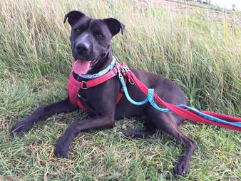 dog waiting for a home for 40 days