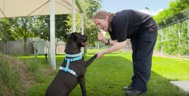 dog waiting for a home for 400 days