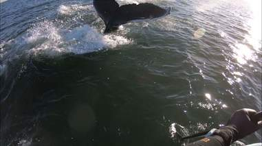 humpback whale jersey shore