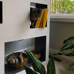 Cat Case was invented for cats