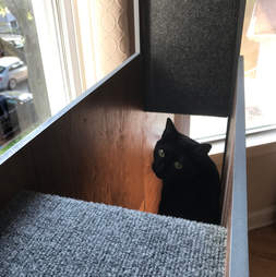 Cat in book case made just for him