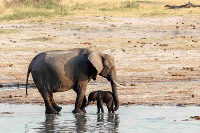 Mother and baby by oasis in Zimbabwe