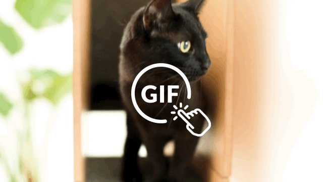 Cat on special Cat Case