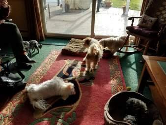 senior rescue dogs Pennsylvania