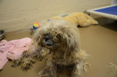 senior dog rescue Pennsylvania