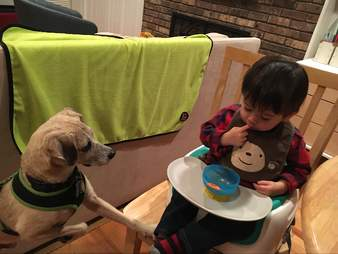 three ways my rescue dog makes me a better dad