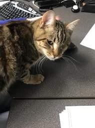 Stray cat needs home in SLC, Utah