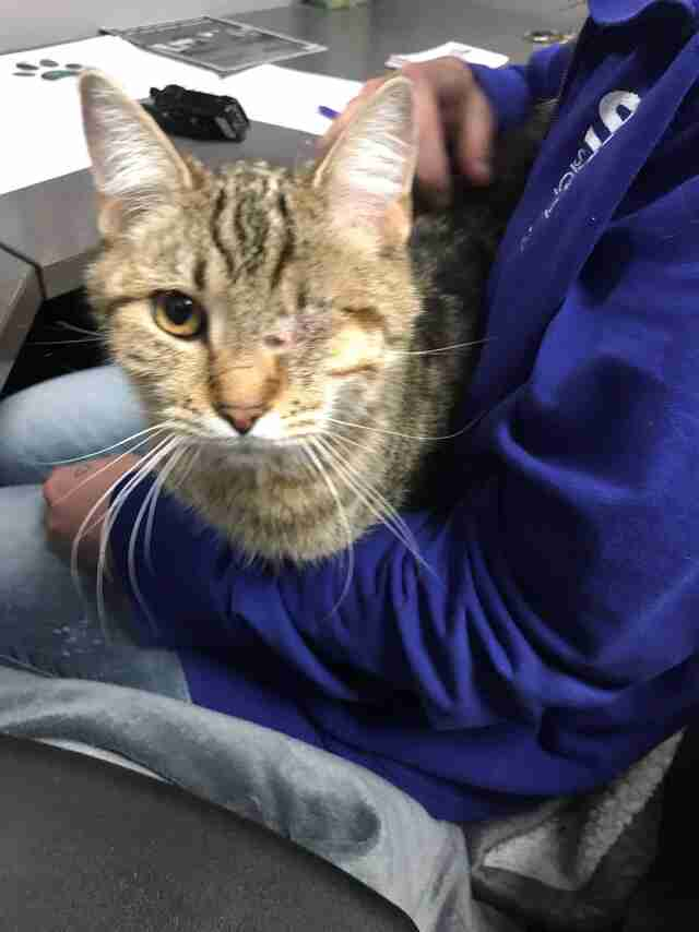 One-eyed cat needs home in Salt Lake County, Utah