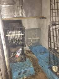 bird cages zoo Florida