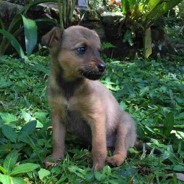 Stray puppy saved by tourists in Costa Rica
