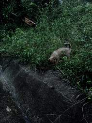 Puppy found in Costa Rica