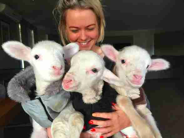 Woman holding three rescued lambs