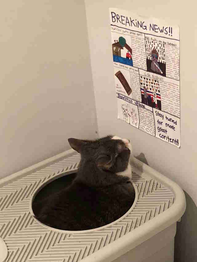 kids make newspaper for cat to read on the litterbox
