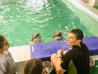 People standing in front of captive dolphins in a swimming pool