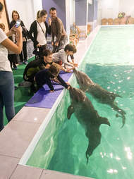 People interacting with captive dolphins in swimming pool