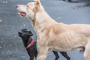 Bonded dogs standing together