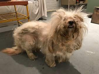 matted dog rescue chicago Illinois