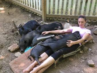Woman lying on lounge chair with lots of pigs