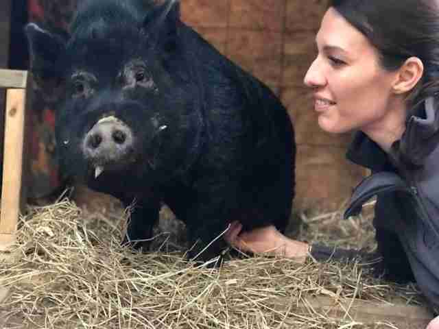 Woman in barn with rescued pig