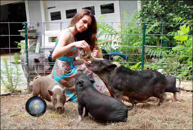 Woman with several rescue pigs around her