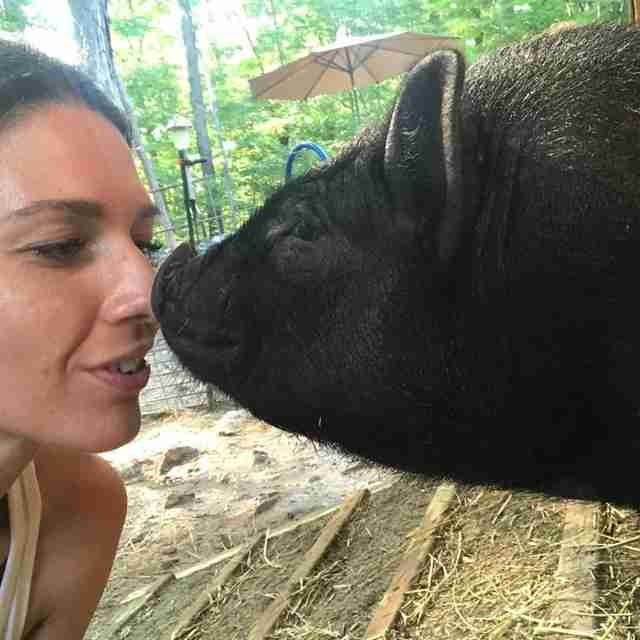 Woman touching noses with rescue pig