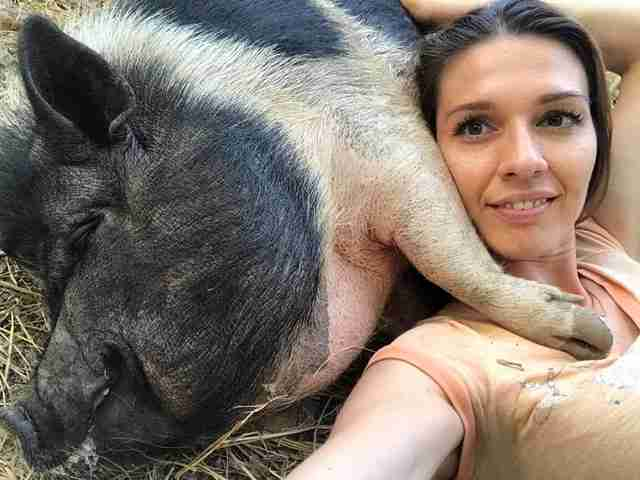 Woman snuggling with big potbellied pig