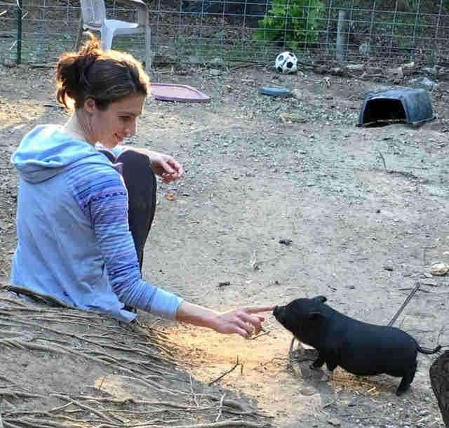 Woman touching the nose of a tiny rescue pig
