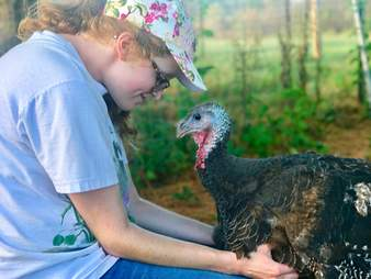Antoinette the turkey gets pet by her rescuer