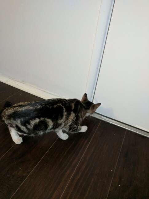 stray cat follows someone home