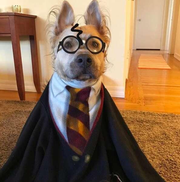 Dog wearing Harry Potter costume