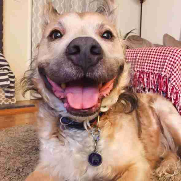 Dog with big smile