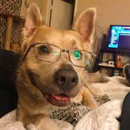 Sweet dog smiling and wearing glasses