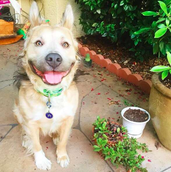 Dog with big smile sitting on sidewalk