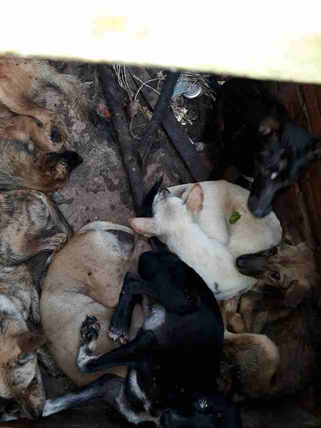 Dogs inside 'hell pit' at dog meat restaurant