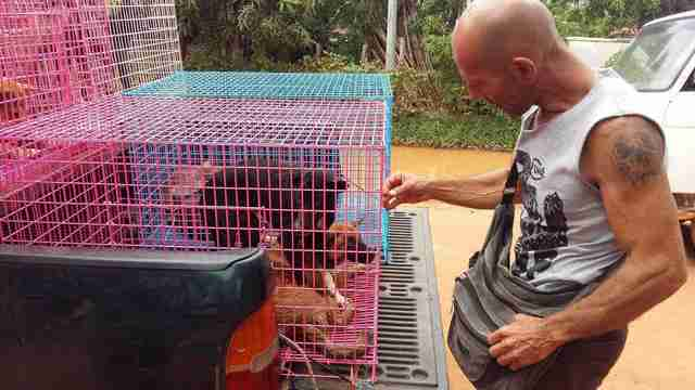 Man comforting rescued dogs in transport cages