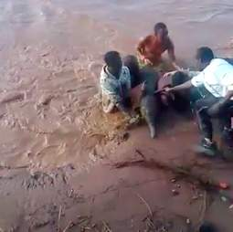 Baby elephant pulled from flooding river