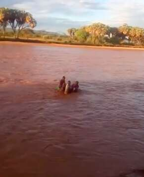 People saving baby elephant from flooding river